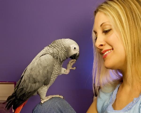 Nikki Moustaki and Parrot