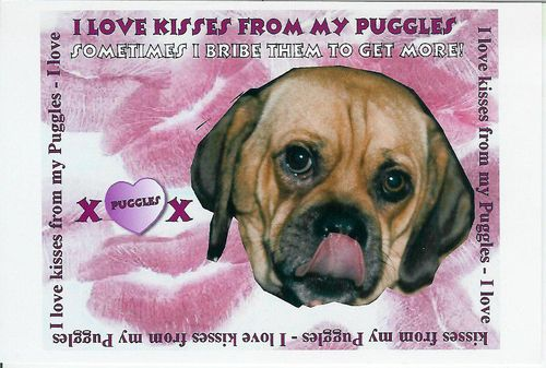 300dogfessions puggle love copy