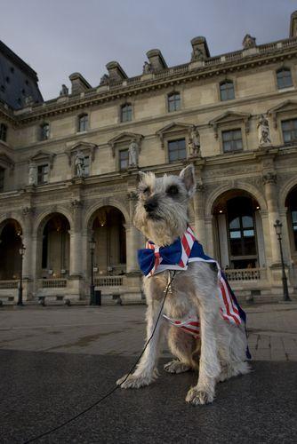 Dog as Uncle Sam