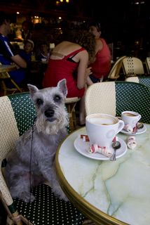 dog in paris cafe