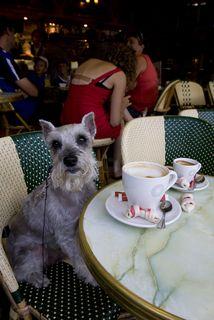 dog in paris cafe