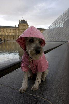 Dog In paris in a raincoat