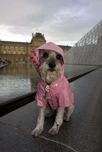 dog in pink raincoat