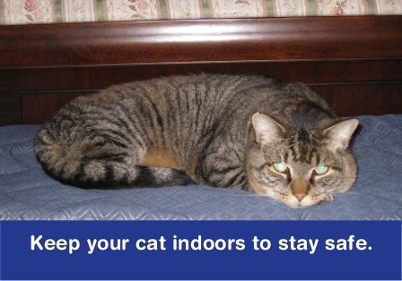 Safe cat