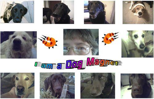 DogMagnet