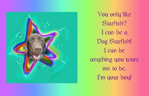 DogStarFish