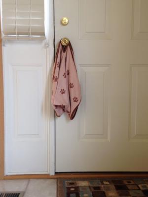 Dry Pets Plus on door